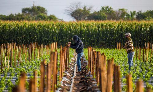 El trabajo rural en México, una historia que se repite