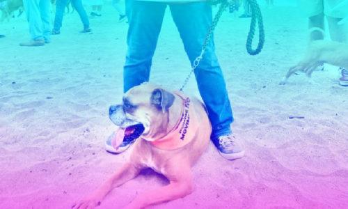 Lupita Guerrero va por un Vallarta Pet Friendly